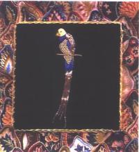 Quetta Bird